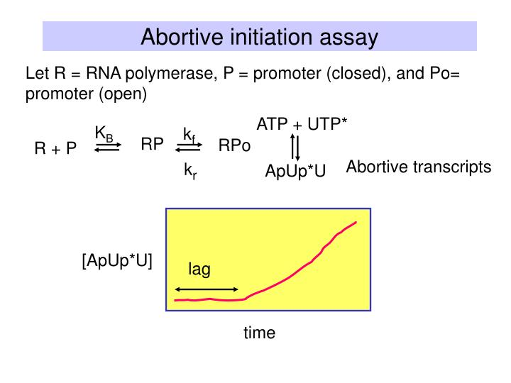 Let R = RNA polymerase, P = promoter (closed), and Po= promoter (open)
