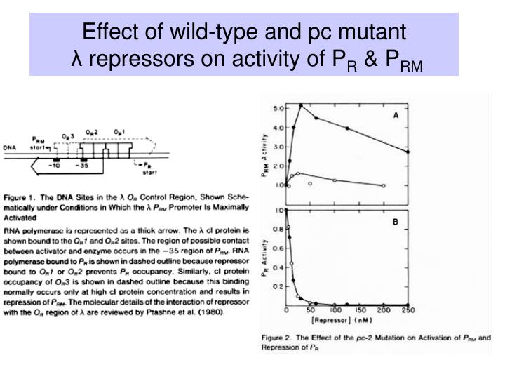 Effect of wild-type and pc mutant