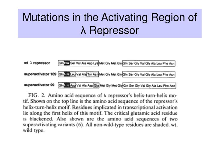 Mutations in the Activating Region of