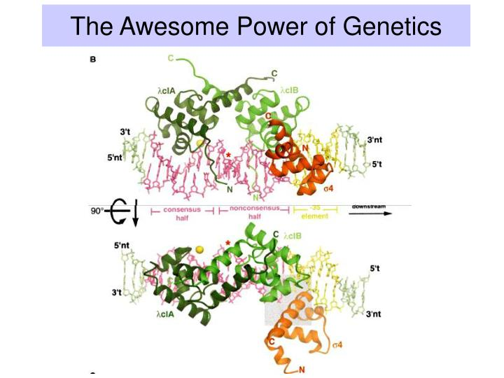 The Awesome Power of Genetics