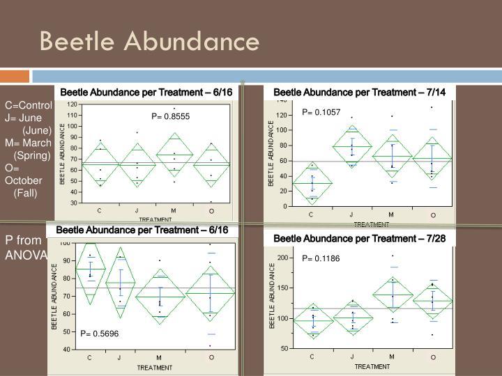 Beetle Abundance