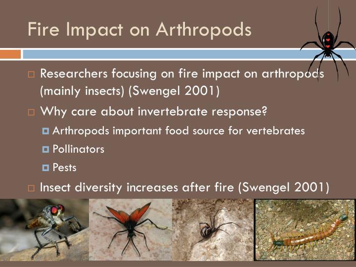 Fire Impact on Arthropods