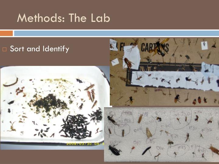 Methods: The Lab