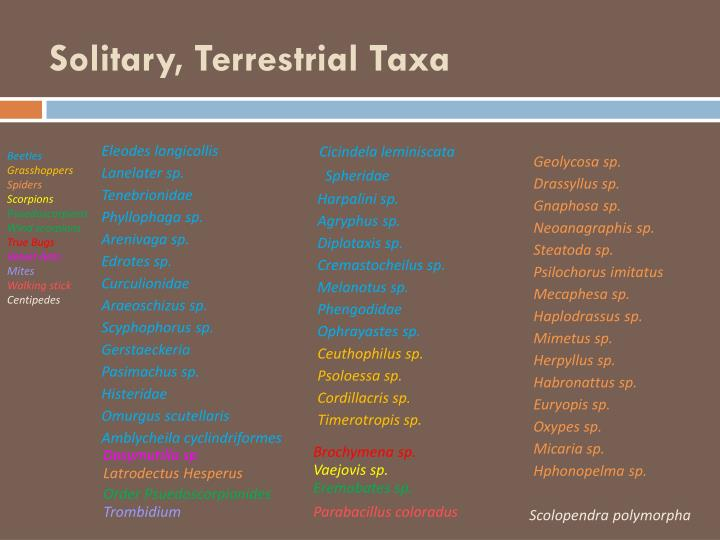 Solitary, Terrestrial Taxa