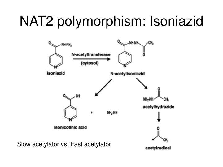NAT2 polymorphism: Isoniazid