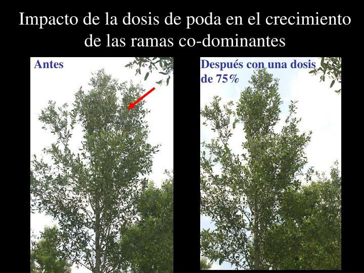 Impacto de la dosis de poda en el crecimiento de las ramas co-dominantes