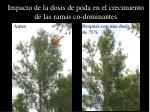 impacto de la dosis de poda en el crecimiento de las ramas co dominantes