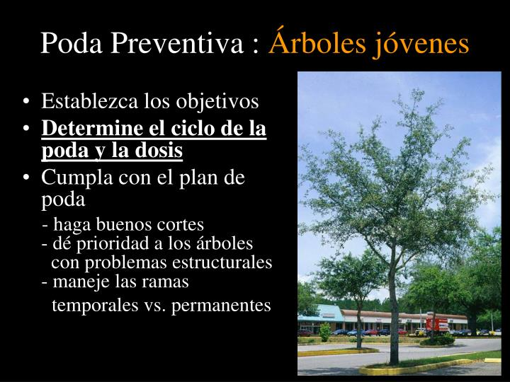 Poda Preventiva :