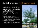poda preventiva rboles j venes1