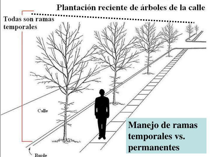 Manejo de ramas temporales vs. permanentes