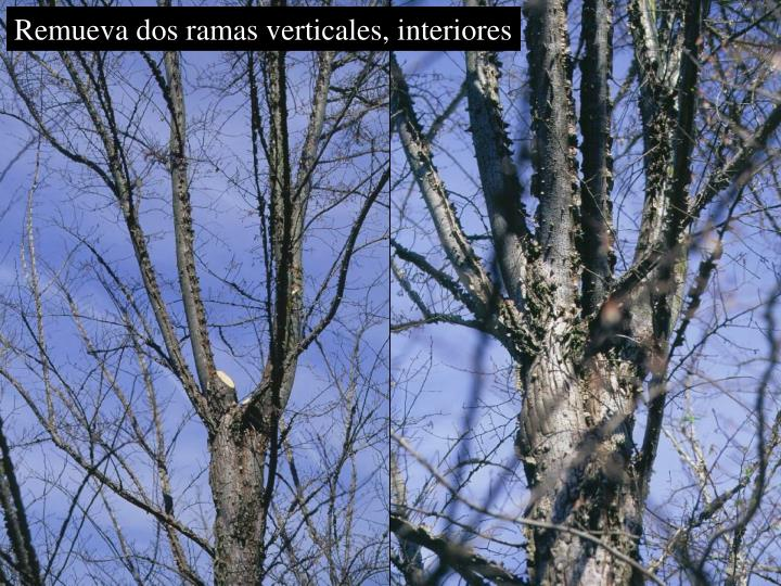 Remueva dos ramas verticales, interiores
