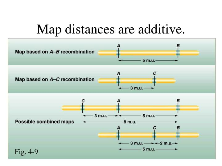 Map distances are additive.