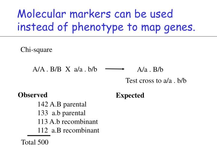 Molecular markers can be used instead of phenotype to map genes.