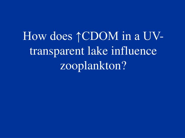 How does ↑CDOM in a UV-transparent lake influence zooplankton?
