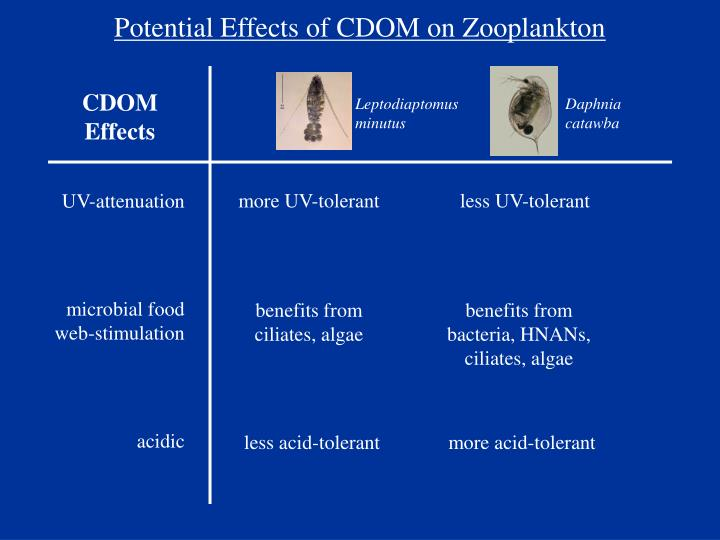 Potential Effects of CDOM on Zooplankton