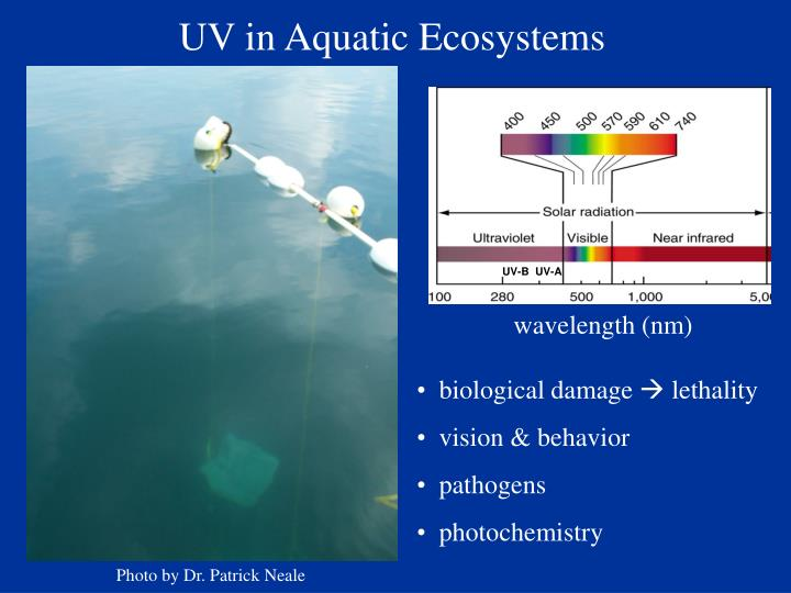 UV in Aquatic Ecosystems