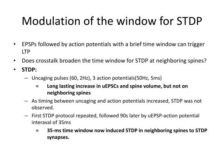Modulation of the window for STDP
