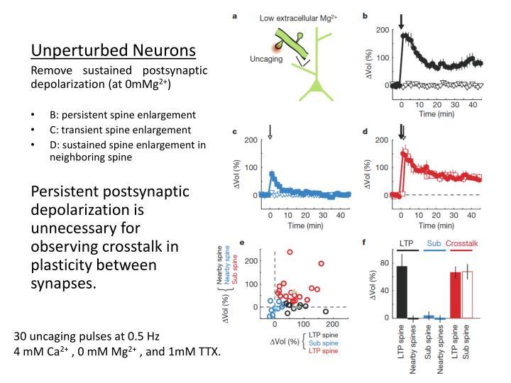 Unperturbed Neurons