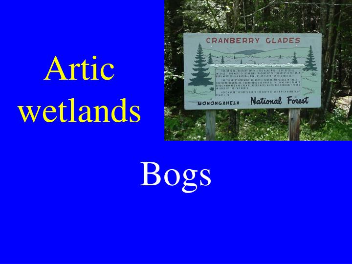 Artic wetlands