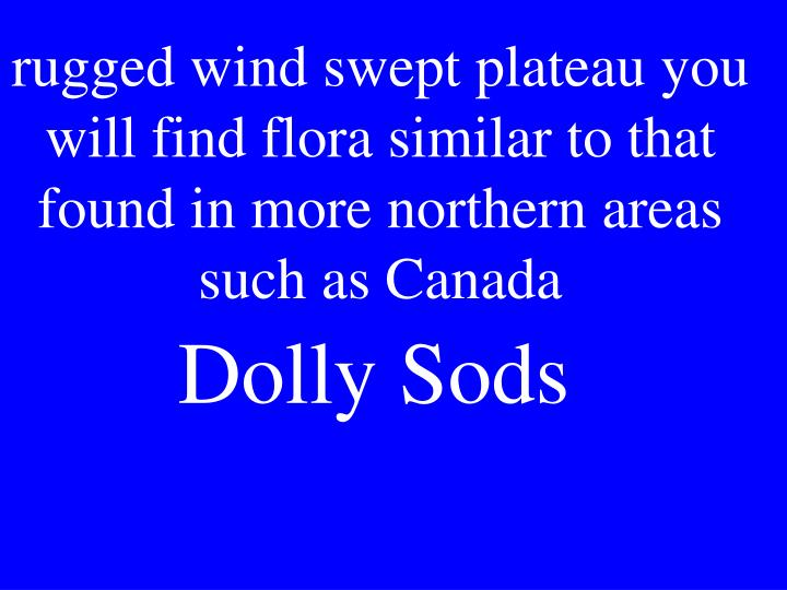 rugged wind swept plateau you will find flora similar to that found in more northern areas such as Canada