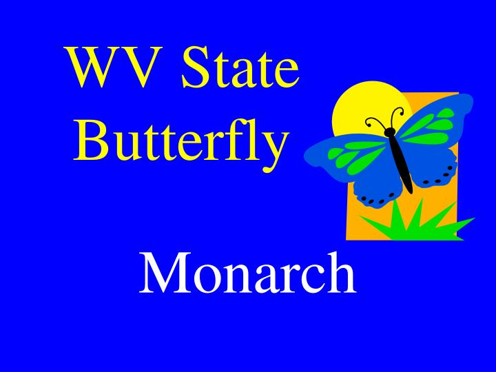 WV State Butterfly