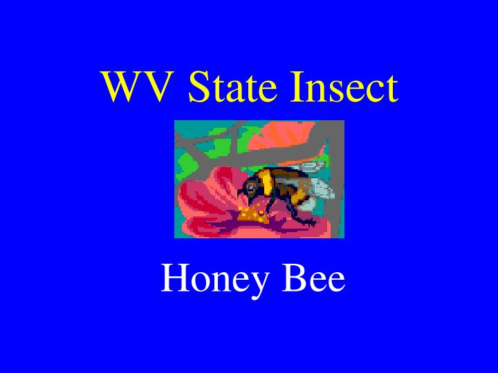 WV State Insect