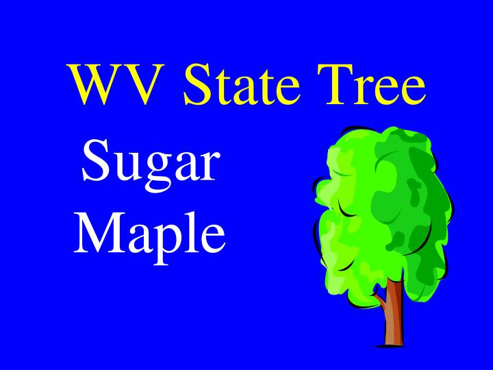 WV State Tree