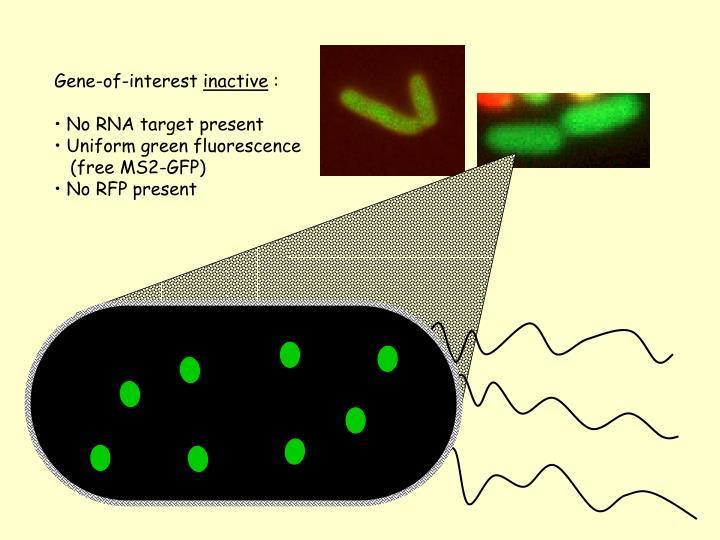 Gene-of-interest
