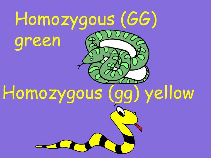 Homozygous (GG) green