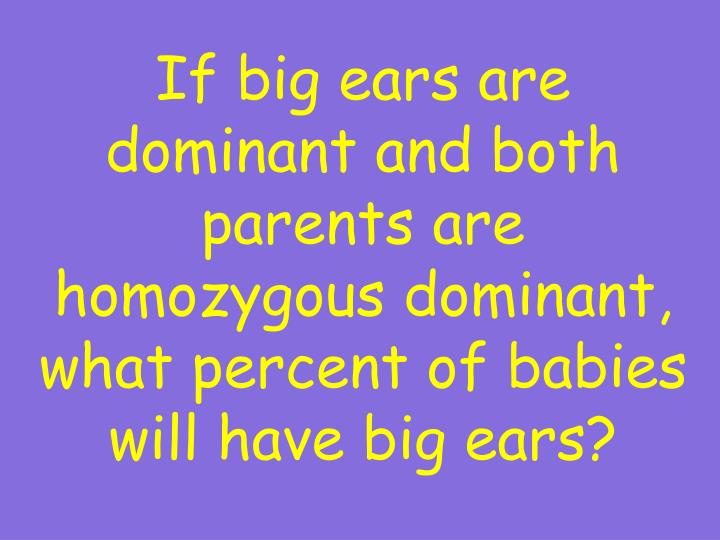 If big ears are dominant and both parents are homozygous dominant, what percent of babies will have big ears?