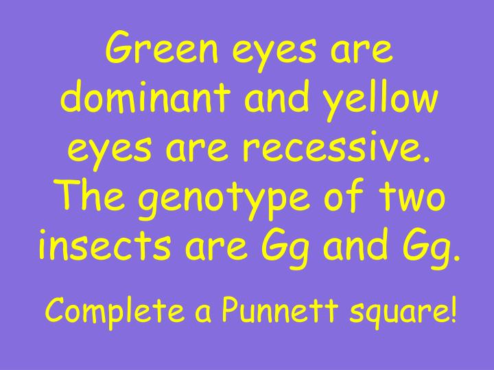Green eyes are dominant and yellow eyes are recessive.  The genotype of two insects are Gg and Gg.
