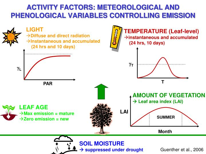 ACTIVITY FACTORS: METEOROLOGICAL AND PHENOLOGICAL VARIABLES CONTROLLING EMISSION