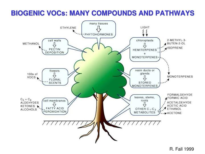 BIOGENIC VOCs: MANY COMPOUNDS AND PATHWAYS