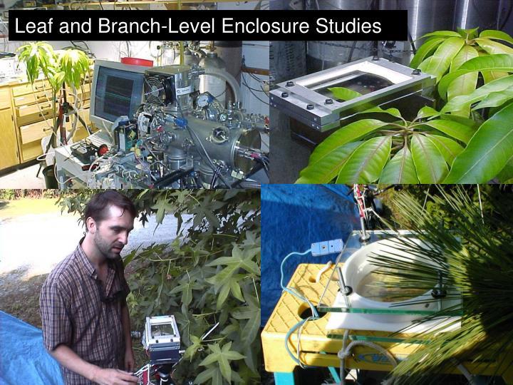 Leaf and Branch-Level Enclosure Studies