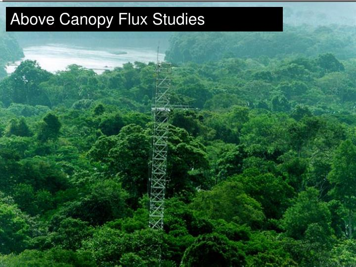 Above Canopy Flux Studies