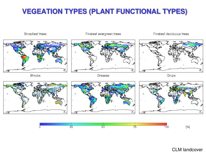 VEGEATION TYPES (PLANT FUNCTIONAL TYPES)