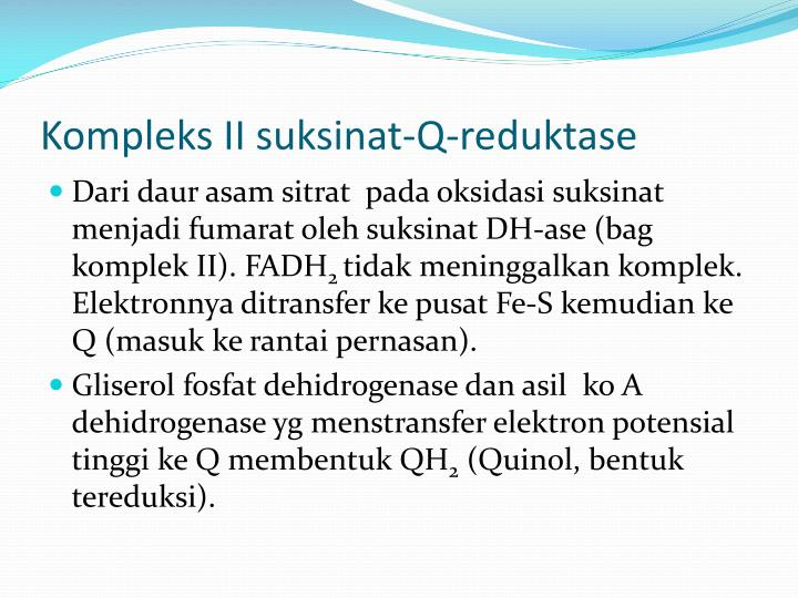 Kompleks II suksinat-Q-reduktase