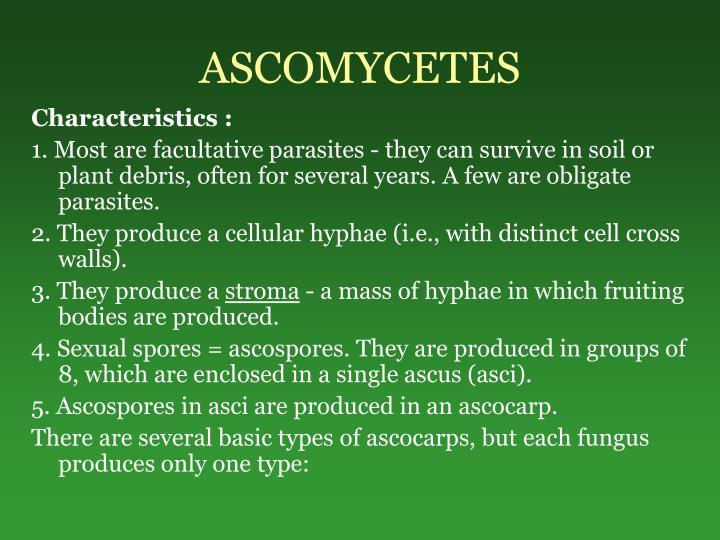 ASCOMYCETES