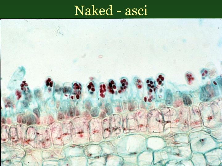 Naked - asci