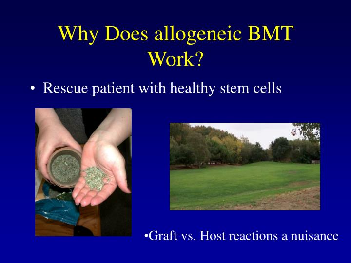 Why Does allogeneic BMT Work?