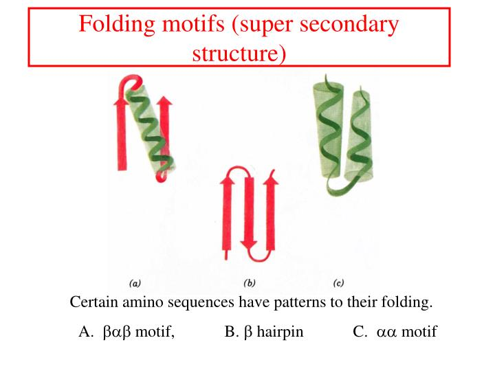 Folding motifs (super secondary structure)