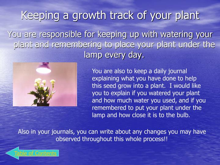 Keeping a growth track of your plant