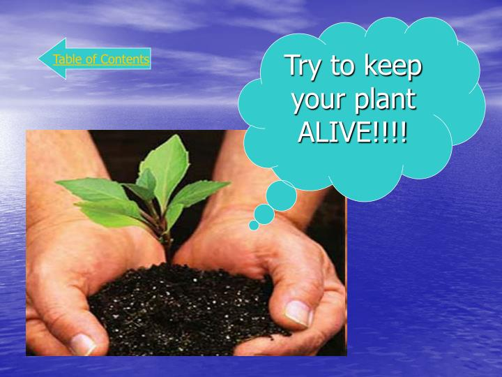 Try to keep your plant ALIVE!!!!