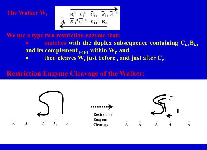 The Walker W