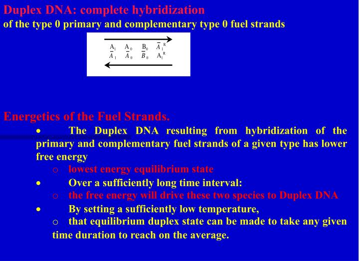 Duplex DNA: complete hybridization