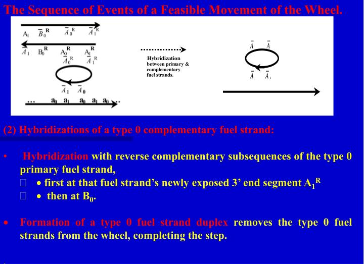 The Sequence of Events of a Feasible Movement of the Wheel.