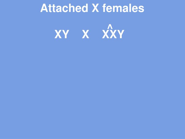 Attached X females