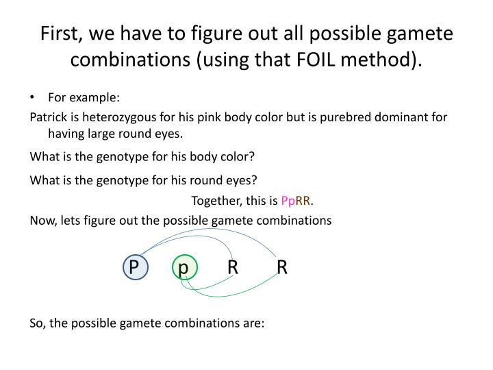 First we have to figure out all possible gamete combinations using that foil method
