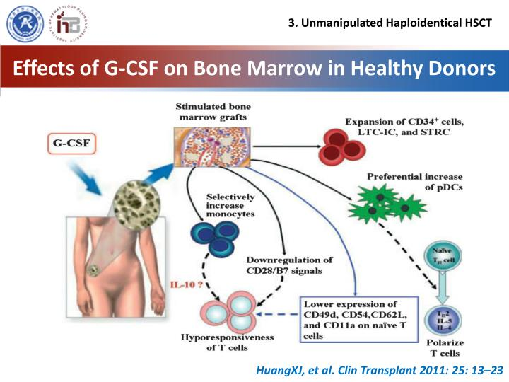 Effects of G-CSF on Bone Marrow in Healthy Donors