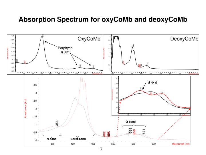 Absorption Spectrum for oxyCoMb and deoxyCoMb